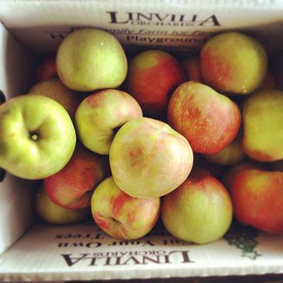 linvilla-orchard-apples-400vp.jpg